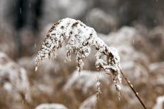 时数横向季节冬天 免版税库存照片