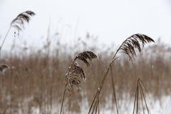 时数横向季节冬天 库存照片