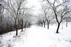 时数横向季节冬天 库存图片