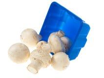 时段蘑菇 库存图片
