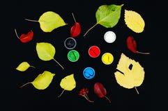 绘时段 油漆在银行中,黑背景的 绘的秋叶的准备在黑背景 荚莲属的植物分支 库存图片