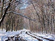 时间森林 库存图片
