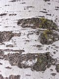 时间腐蚀的吠声细节,一个几百年的公园的植物之前 纹理和抓痕在时间造成的吠声 库存照片
