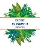 时髦在白色背景的夏天热带叶子传染媒介设计 向量例证