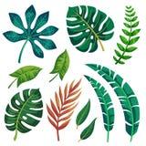时髦在白色背景的夏天热带叶子传染媒介设计 皇族释放例证