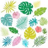 时髦夏天热带棕榈叶,密林leaves_1 免版税库存图片