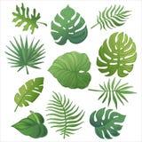 时髦夏天热带棕榈叶,密林leaves_3 库存图片