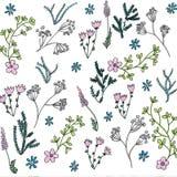 时髦明亮的夏天开花的庭院概述和许多手绘的花种类花卉在无缝的样式 向量例证