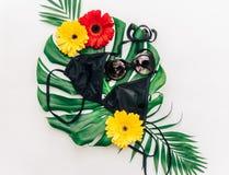 时髦最小的夏天概念 太阳镜和比基尼泳装在热带 免版税库存图片