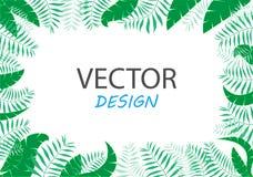 时髦热带叶子传染媒介设计 向量横幅 文本的框架设计 库存照片