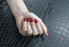 时髦的时兴的女性红色表面无光泽的修指甲,方形的形状 图库摄影