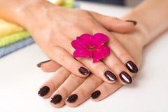 时髦的时髦女性钉子修指甲 有紫色钉子颜色的美好的少妇湿手与闪亮金属片和花在手指 库存图片