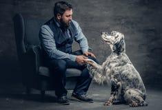 时髦的有胡子的男性坐椅子和爱尔兰人的特定装置狗 库存图片