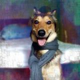 时髦的狗 库存图片
