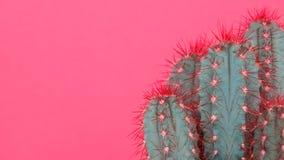 时髦粉红彩笔上色了与仙人掌植物的最小的背景 仙人掌厂关闭 黑眼睛表面方式性感的样式妇女 免版税库存图片