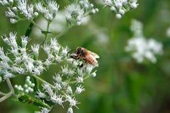 时刻做蜂蜜 图库摄影