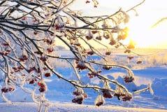 时间冬天 图库摄影