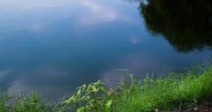 时间间隔射击了水表面在池塘 股票视频