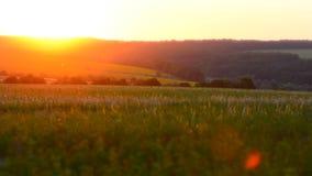 时间间隔自然和太阳横跨干草原 股票录像