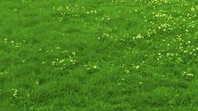 时间间隔-割的草坪 股票录像