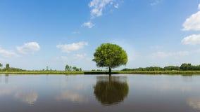 时间间隔移动的云彩英尺长度录影在一个唯一大橡树后的 股票视频