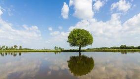 时间间隔移动的云彩英尺长度录影在一个唯一大橡树后的 影视素材