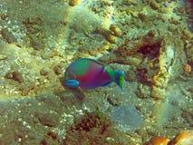 兴旺的珊瑚礁活与海洋生物和 库存图片