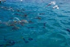 昆士兰伟大的礁石 图库摄影