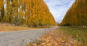 昆斯敦和农村新西兰在秋天 图库摄影