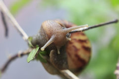 从昆虫、自然和野生生物的照片 免版税库存图片