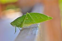 昆虫叶子 库存图片