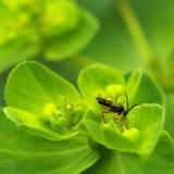 昆虫叶子 库存照片