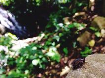 昆虫和瀑布视图 库存照片
