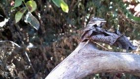 昆虫和牲口在春天 库存图片