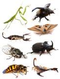 昆虫和蝎子 免版税库存照片
