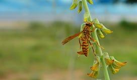 昆虫和野花 免版税图库摄影