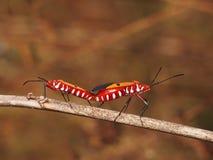 昆虫在夏天 免版税图库摄影