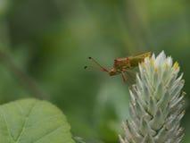 昆虫在春天 免版税库存照片