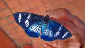 昆虫在玻利维亚,南美洲 库存照片
