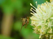 昆虫坐花 库存照片