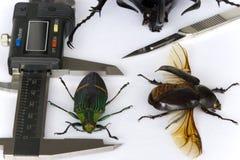 昆虫学 库存图片
