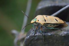 昆虫宏指令视图 免版税库存照片