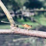 昆虫宏指令  免版税库存图片
