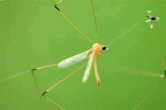 昆虫微小的万维网 库存图片