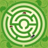 昆虫旅行 免版税库存图片