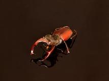 昆虫是†‹â€ ‹兴趣区域他们的生活我们的知识和我们的对于他们的态度 库存图片