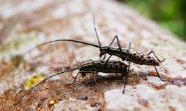 昆虫木头 库存照片