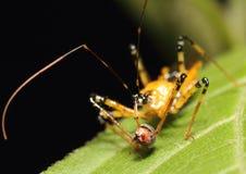昆虫杀害 免版税库存照片