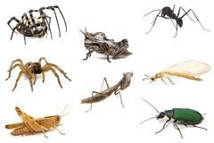 昆虫查出集合白色 免版税库存图片