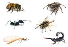 昆虫查出集合白色 免版税库存照片